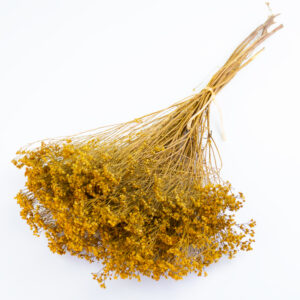 This image shows dried broom bloom in a rich yellow colour, laid on a white background.