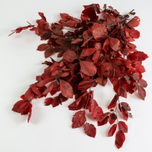 This image shows a bunch of red preserved beech tree stems with rich-red leaves, laid on a white background.