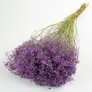 This image shows a giant bunch of dried lilac coloured gypsophila, laid on a white background.