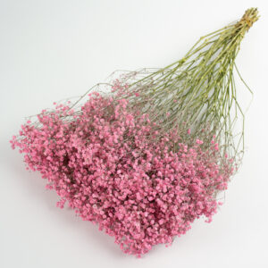 This image shows a giant bunch of dried pink coloured gypsophila, laid on a white background.