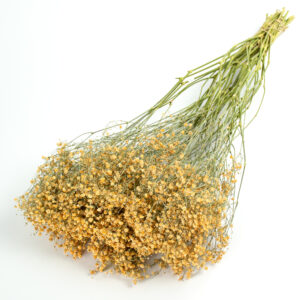 This image shows a giant bunch of dried peach coloured gypsophila, laid on a white background.