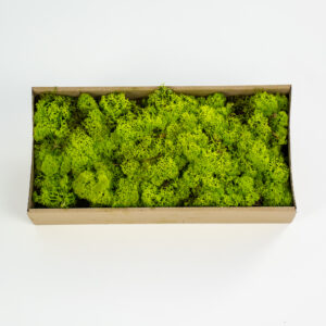 This image shows a box of reindeer moss, laid on a white background.