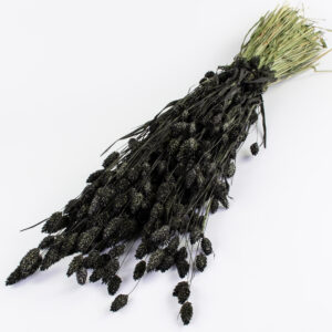 This image shows a bunch of phalaris that has been coloured black, laid on a white background