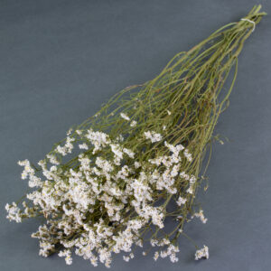 This image shows a bunch of limonium sinensis in white, laid on a grey background