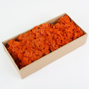 This image shows a box containing bright orange coloured reindeer moss, against a white background.