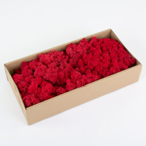 This image shows a box containing bright red coloured reindeer moss, against a white background.