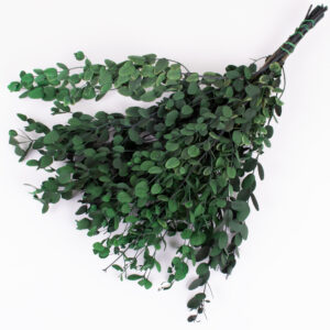 This image shows a bunch of eucalyptus gunni green, against a white background