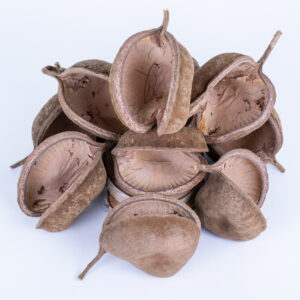 This image shows a group of 10 Buddha nuts against a white background