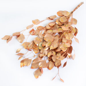 This image shows a bunch of copper coloured eucalyptus populus against a white background