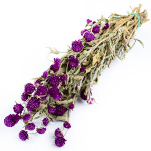 This image shows a bunch of dried gomphrena in a milka, or medium purple, colour against a white background.