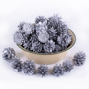 This image shows a group of silver painted pine cones against a white background