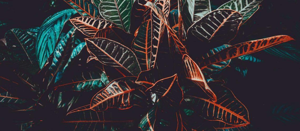 Fresh tropical foliage